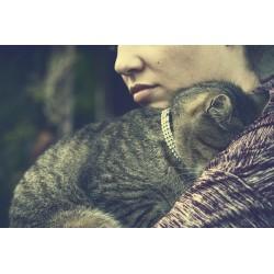 Collier et médaille ou laisse et harnais ? Quelles précautions prendre si mon chat sort de la maison?