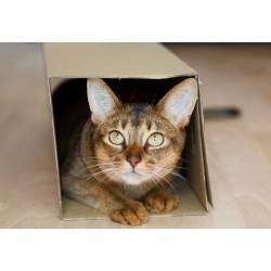 16 conseils pour déménager avec son chat