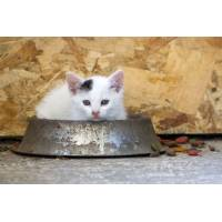 Pourquoi le chat est-il si délicat lorsqu'il s'agit de nourriture ?