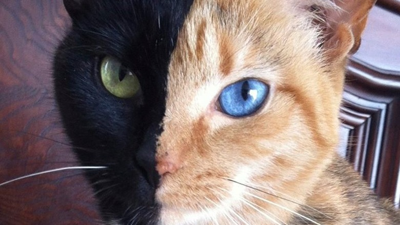 Résultats de recherche d'images pour «venus chat»