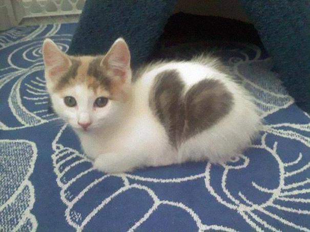 chaton coeur