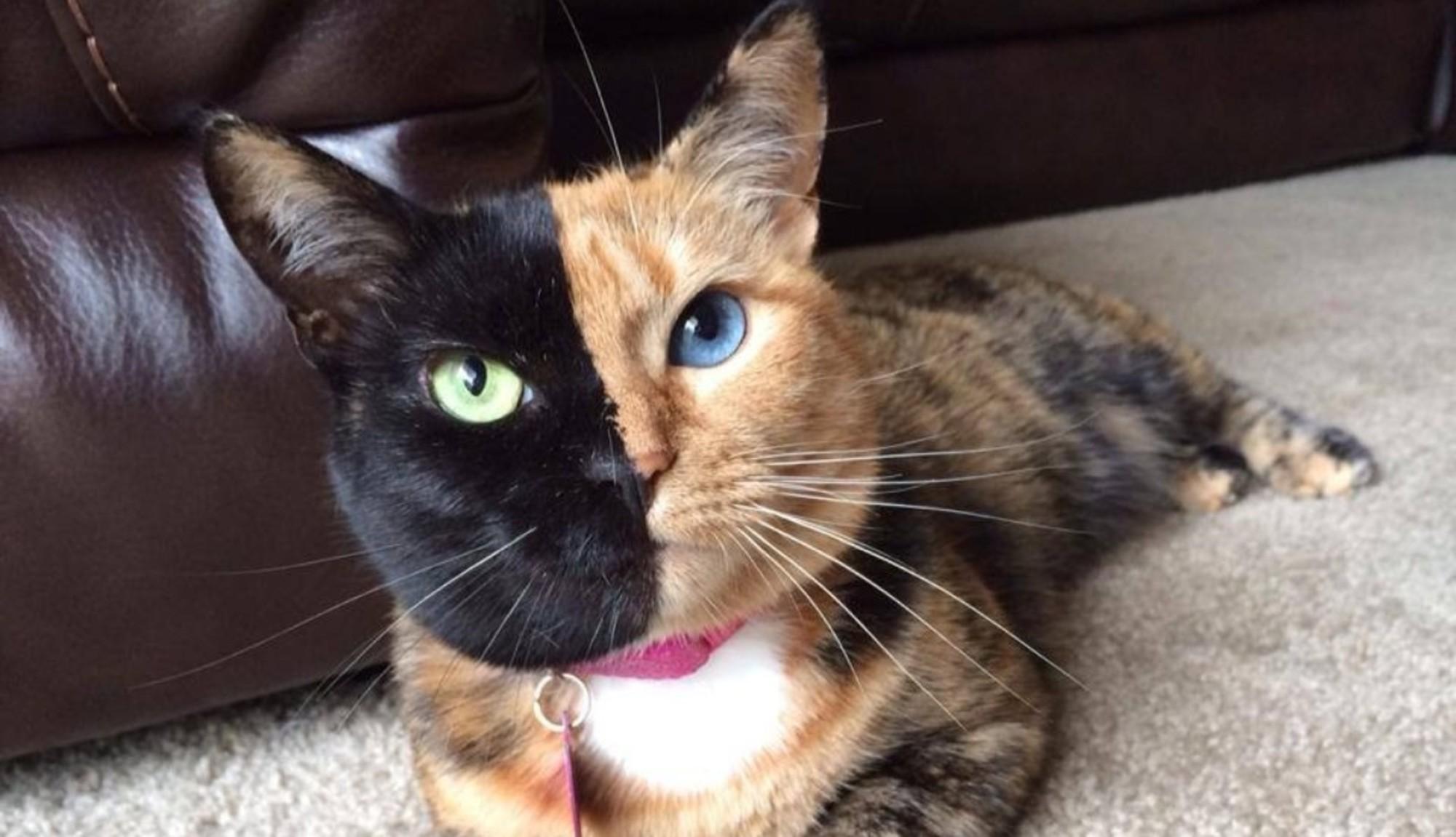 10 chats célèbres pour leur pelage original