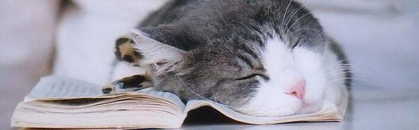 20 chats expliquent pourquoi lire c 39 est le bonheur cat apart - Pourquoi un chat fait pipi sur le lit ...
