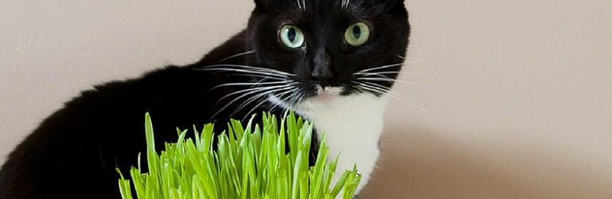 Faites plaisir votre chat avec un mini jardin d - A poil dans son jardin ...