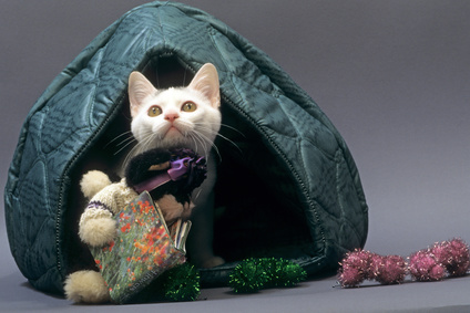 dômes et maisonspour chat