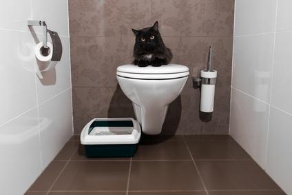higiéne de la litiére