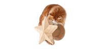 Griffoir murla pour chat Twinkle Star - MY ZOO