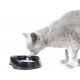 Gamelle à eau spécial chats à museau plat Whisker 330 ml
