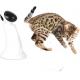 Jouet électronique pour chat Robot Laser - ALL FOR PAWS