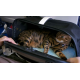 SLEEPYPOD AIR - Sac de transport pour chat spécial avion