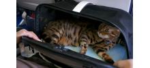 SLEEPYPOD AIR - Sac de transport pour chat spécial avion