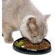 Gamelle pour chat à museau plat Whisker