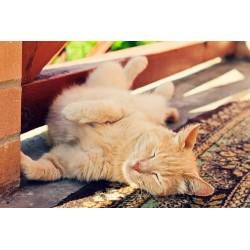 Comment s'organiser avec un chat pendant les vacances ?