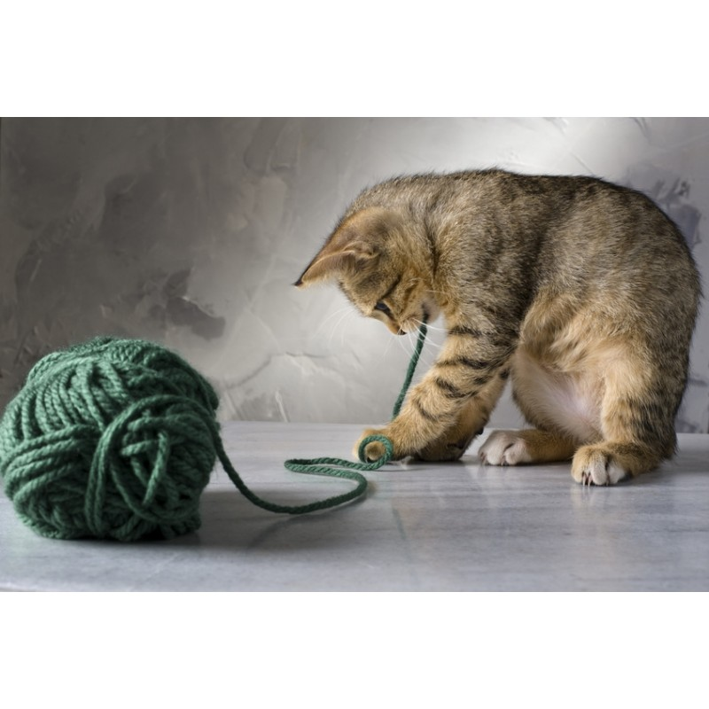 Pourquoi mon chat a-t-il besoin de jouer pour son bien-être ?