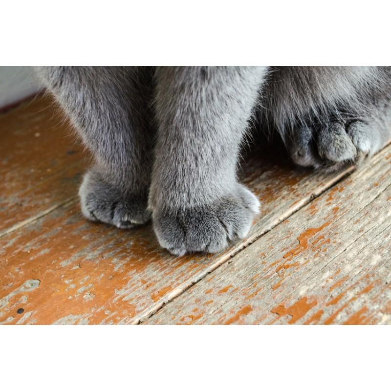 Quelles règles respecter pour que mon chat utilise sa litière pour faire pipi ?