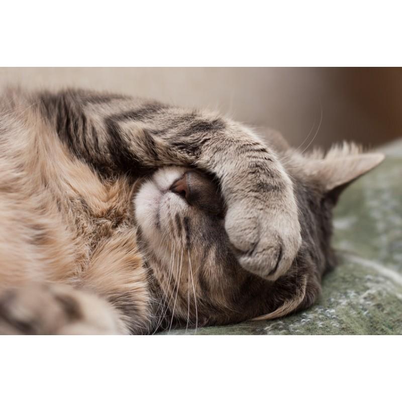 Mais pourquoi mon chat dort-il autant ?