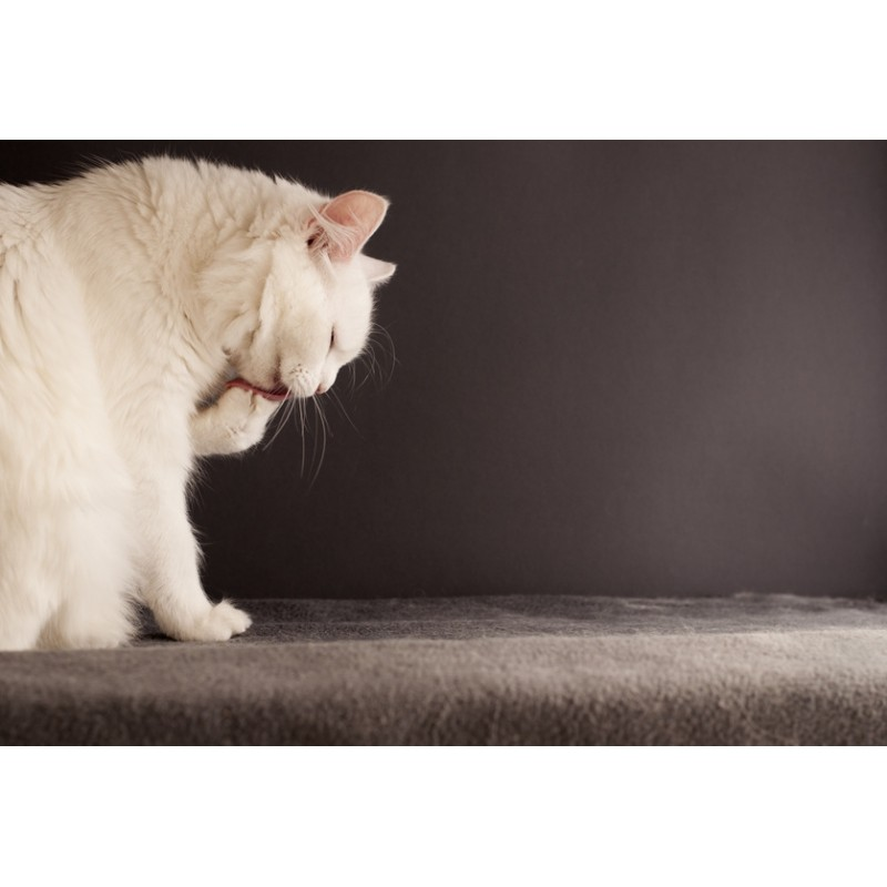 Pourquoi les chats se lavent-ils beaucoup ?