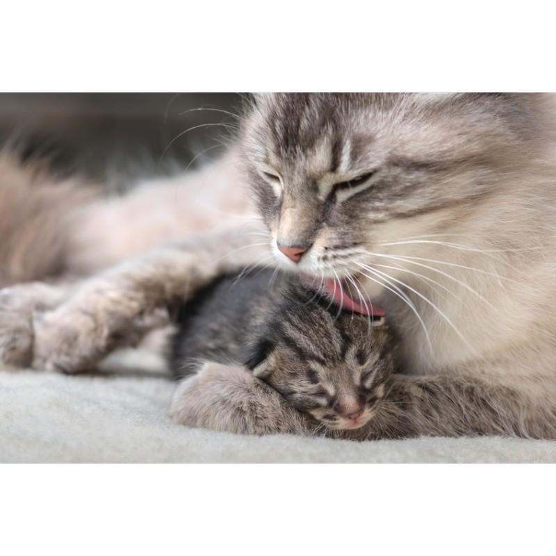 Les chats sont-ils vraiment faits pour vivre en appartement ?