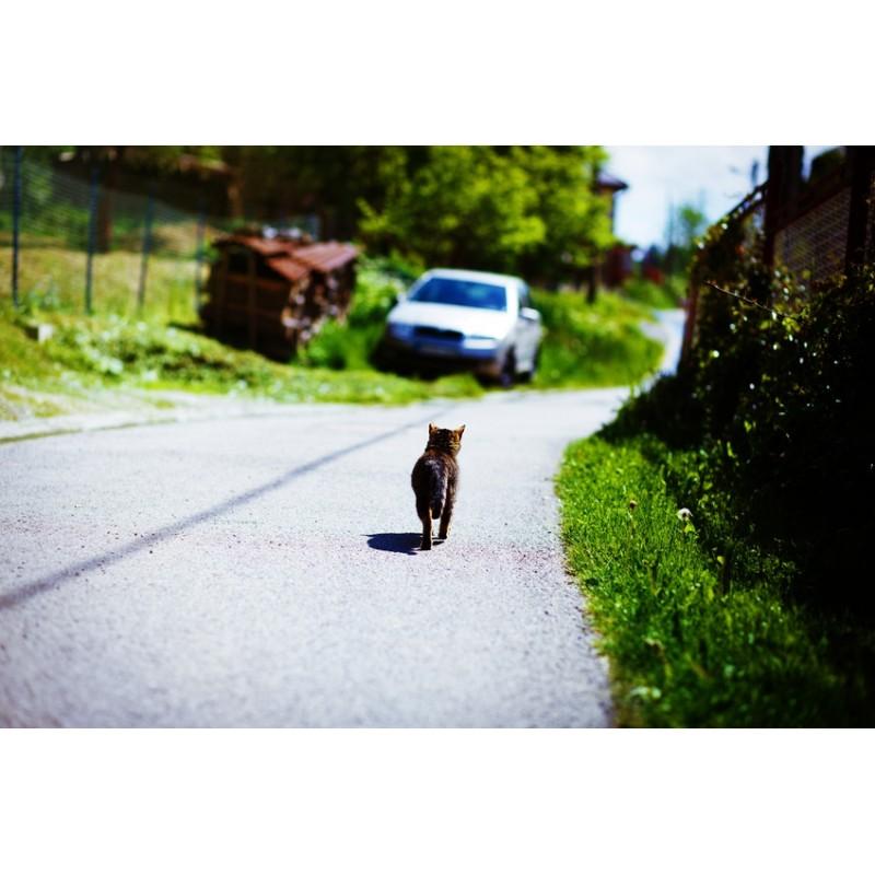 Dois-je laisser sortir mon chat d'intérieur durant les vacances d'été ?