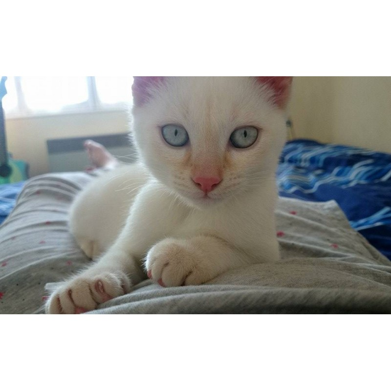 adolescent chatte images