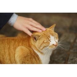 6 raisons pour lesquelles vous devez caresser votre chat plus souvent