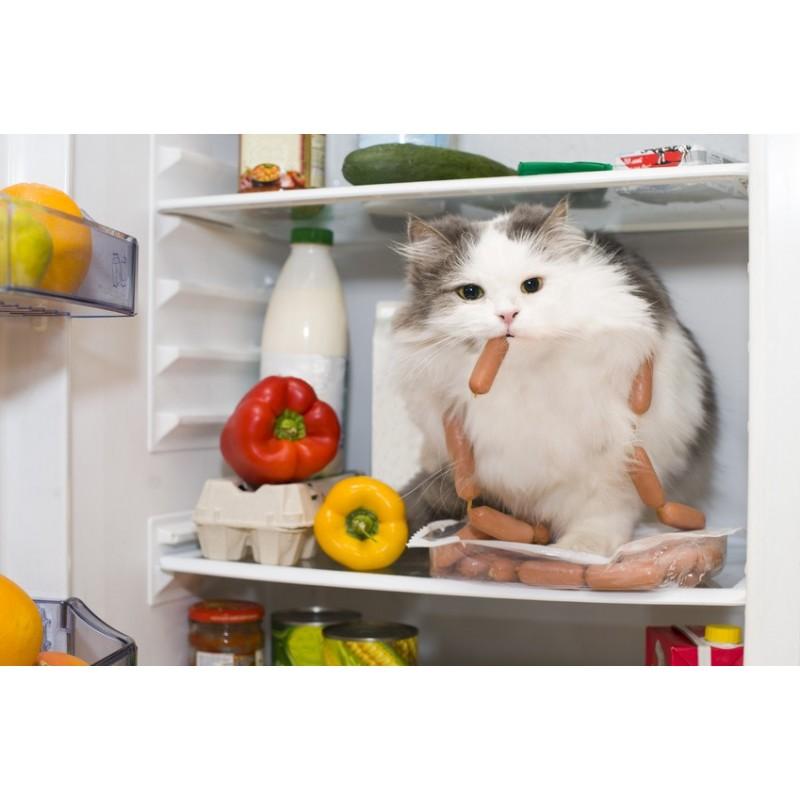 7 conseils pour faire perdre du poids à son chat (Partie 1)