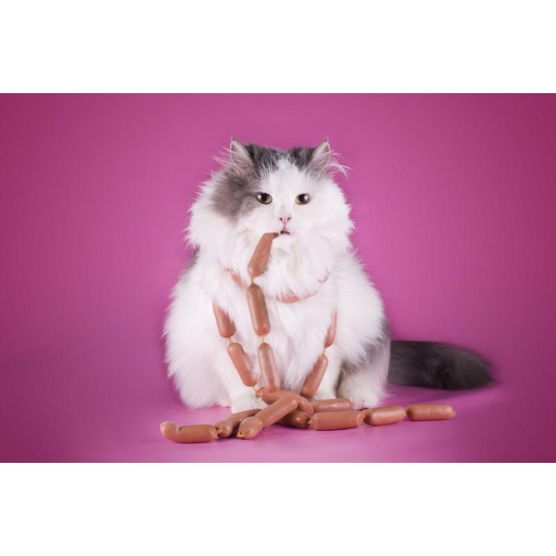 7 conseils pour faire perdre du poids à son chat (Partie 2)
