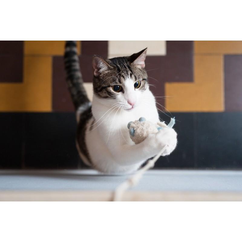 10 jouets que votre chat va adorer !