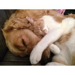 Comment faire en sorte que mon chat et mon chien s'entendent bien ?