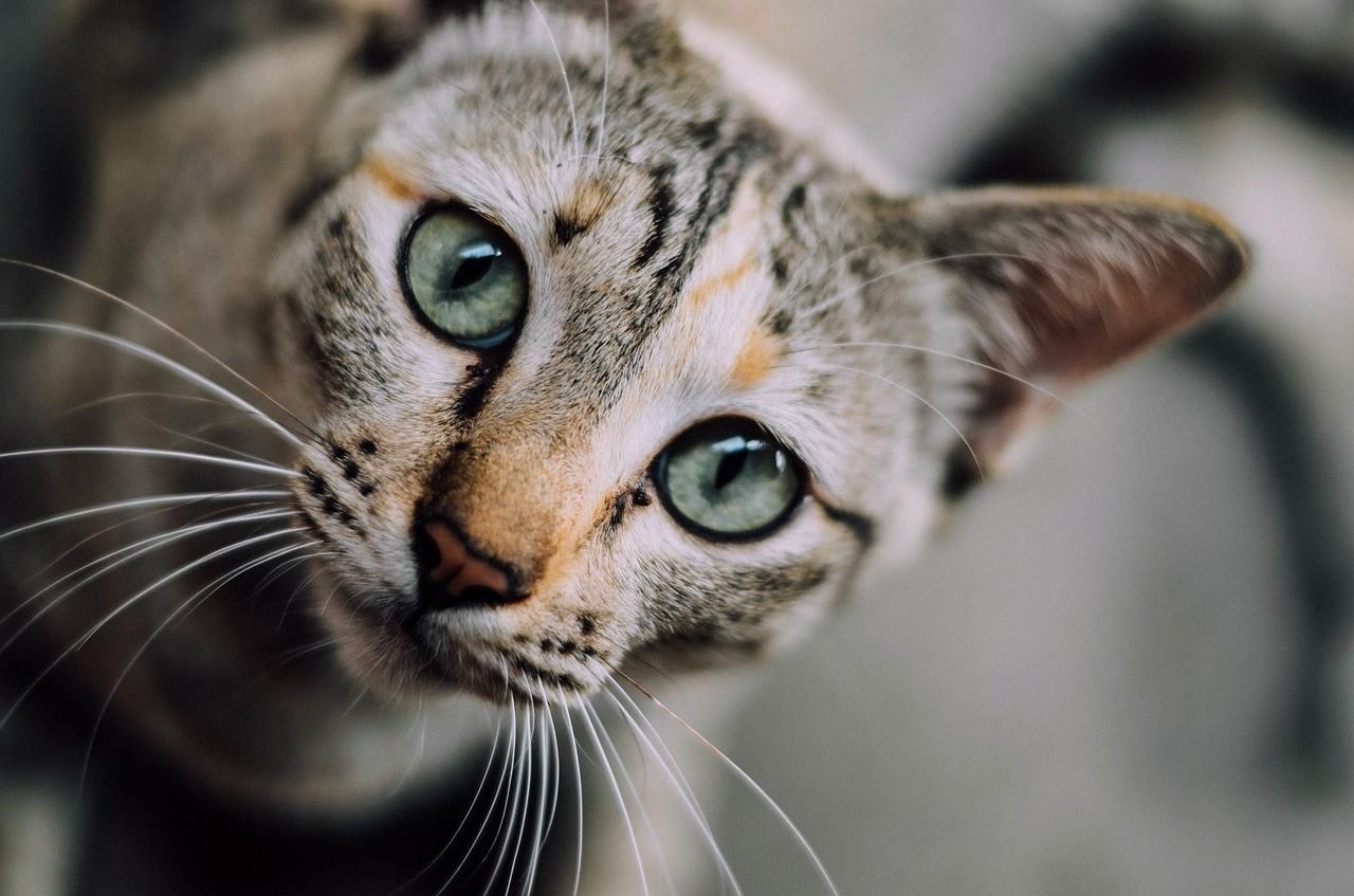 Rencontre entre deux chats site rencontre amis rencontre rencontre