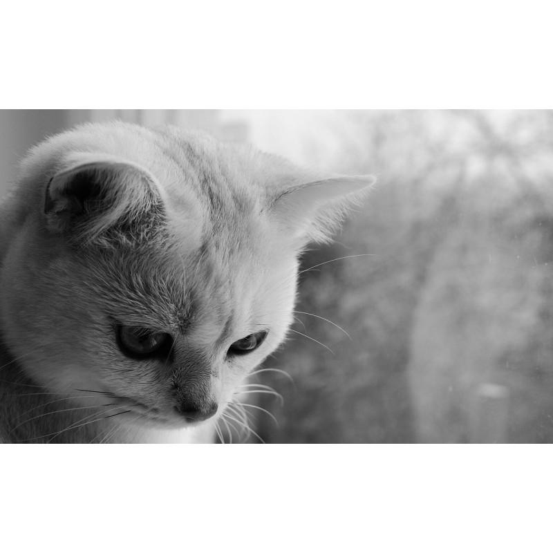 Mon chat est mort : comment gérer son deuil ?