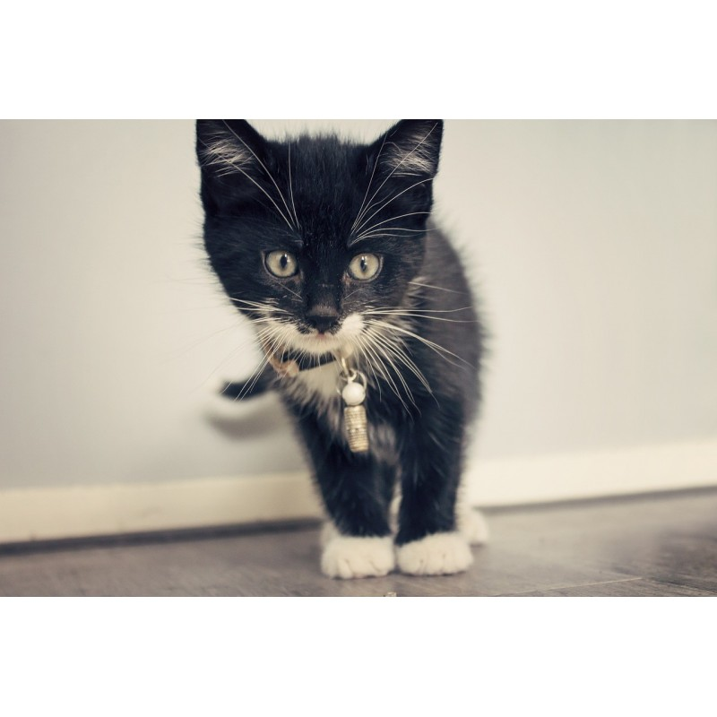 J'ai perdu mon chat et je veux adopter un chaton