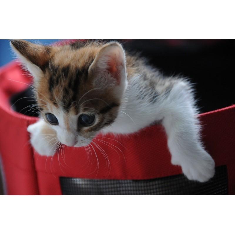 Un chaton, ça change la vie ! Ne foncez pas tête baissée et choisissez un chat qui vous correspond