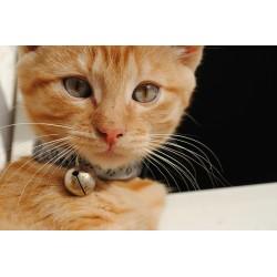 La famille va bientôt s'agrandir avec un nouveau chaton adopté à la SPA ou chez un éleveur !