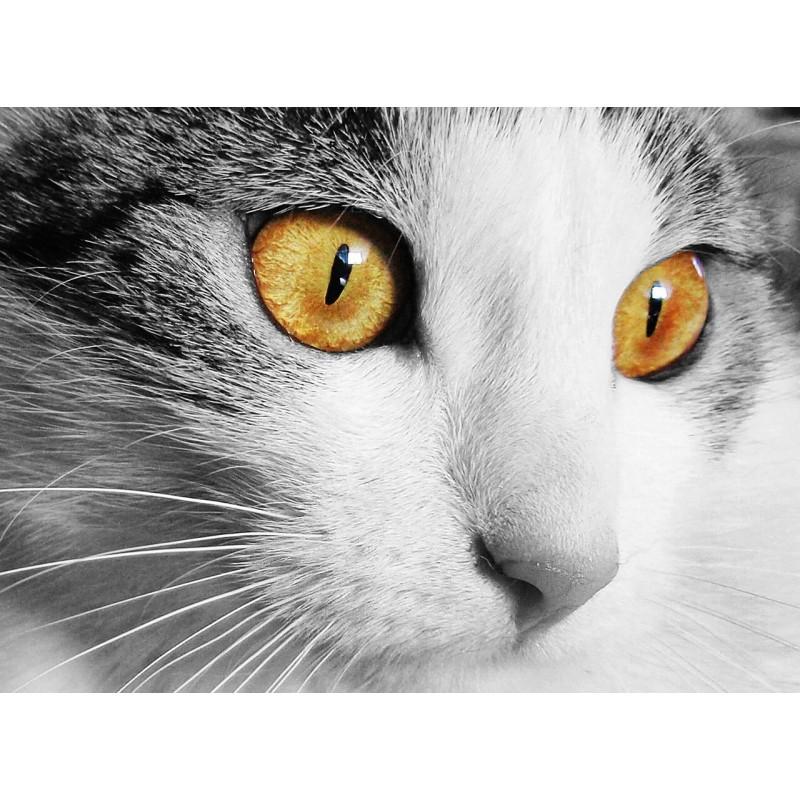 Souhaitez-vous adopter un chat mâle ou une jolie petite Minette ?