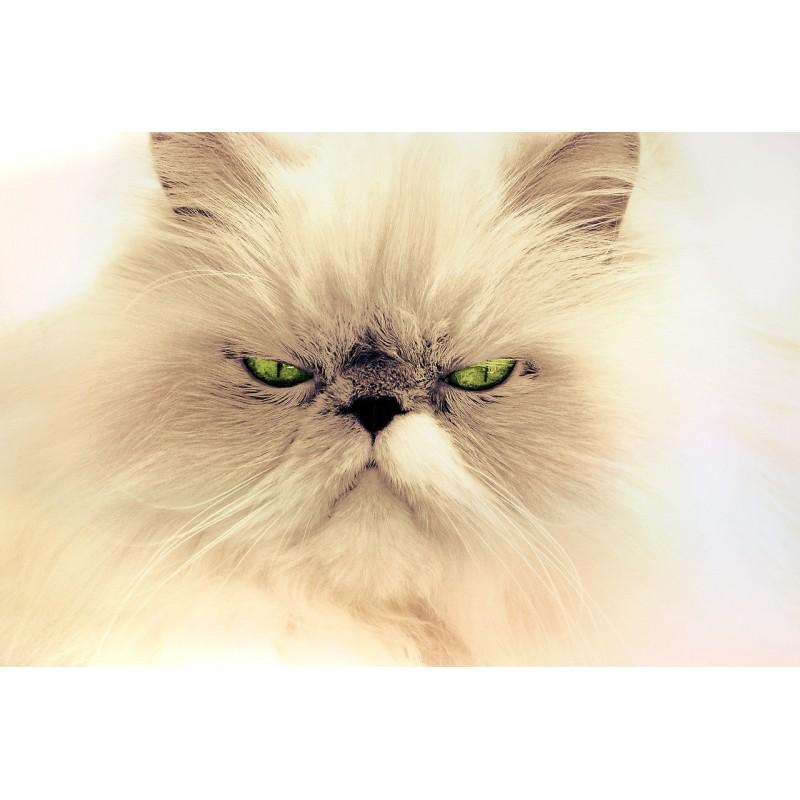 Une cohabitation réussie entre votre chat et vos autres animaux