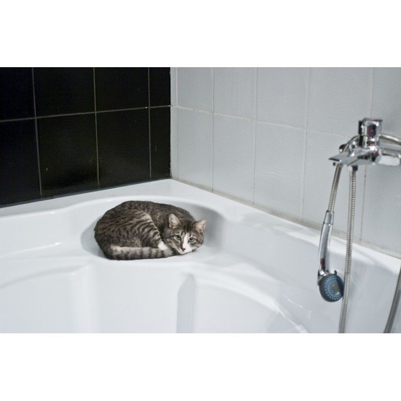Comment donner le bain à son chat ?