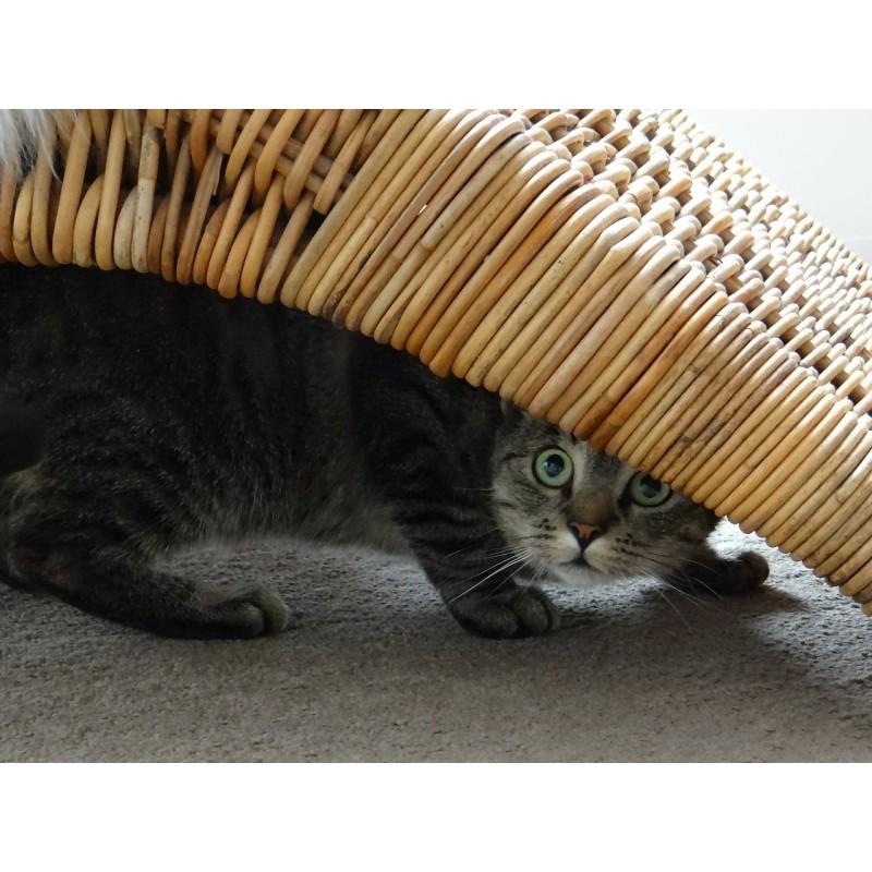 Comment rassurer un chat peureux ?
