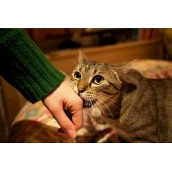 8 conseils si votre chat vous mord sans raison