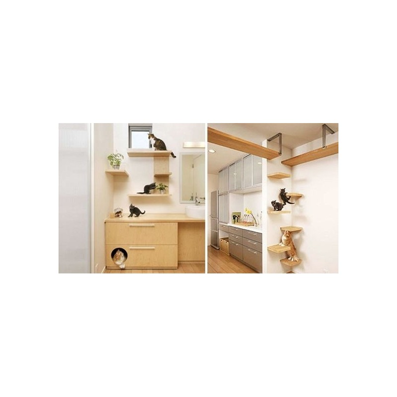 comment am nager mon studio avec mon chat cat apart. Black Bedroom Furniture Sets. Home Design Ideas