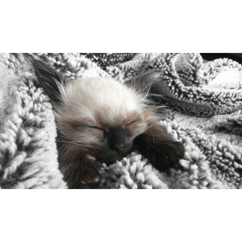 6 choses à faire pour empêcher votre chat de vous réveiller la nuit
