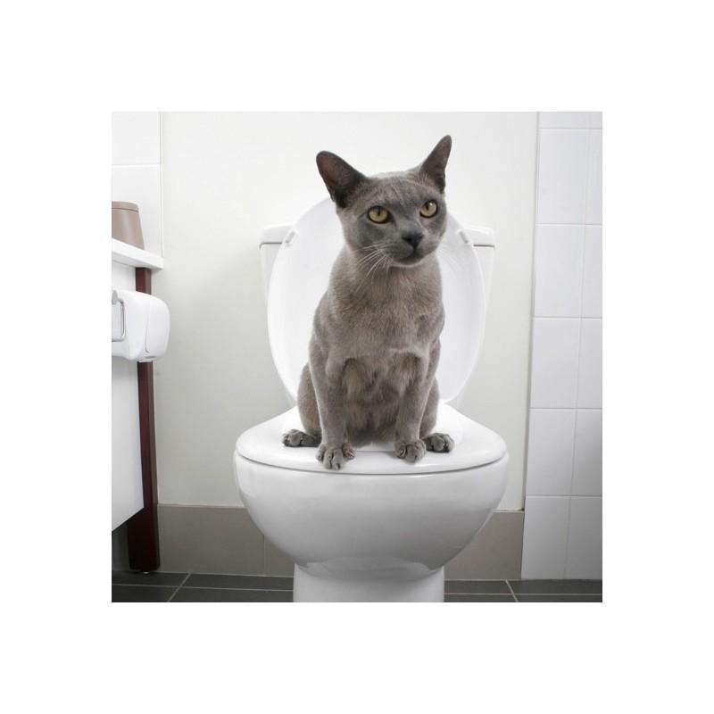 7 tapes simples pour apprendre votre chat utiliser - Comment empecher un chat de faire pipi partout ...