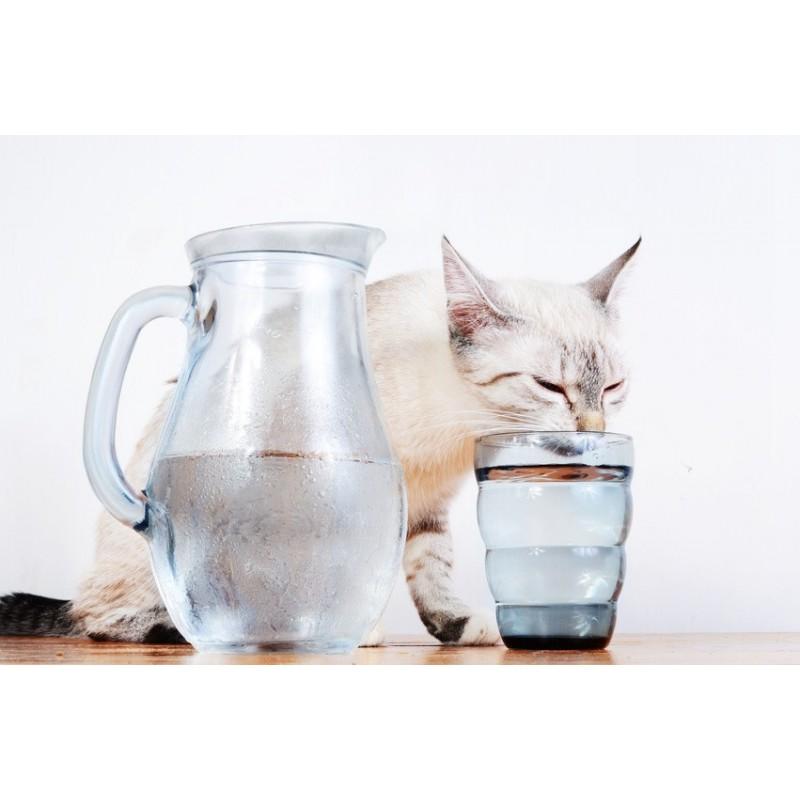 Savez-vous si votre chat boit trop ou pas assez ? comment optimiser sa prise d'eau au quotidien ?