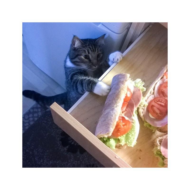 Au secours, mon chat vole la nourriture !