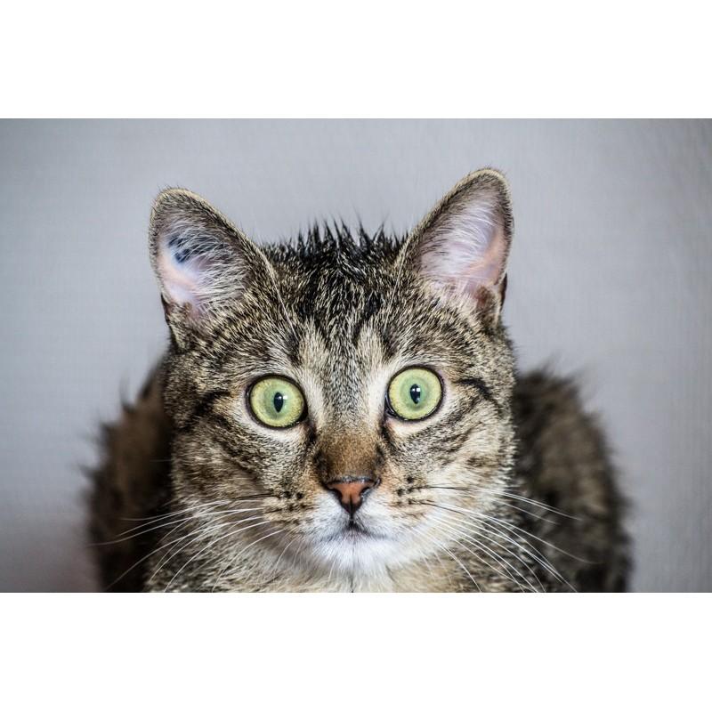 Pourquoi la plupart des chats ont-ils peur de l'eau ?