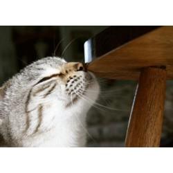 Comment votre chat marque son territoire