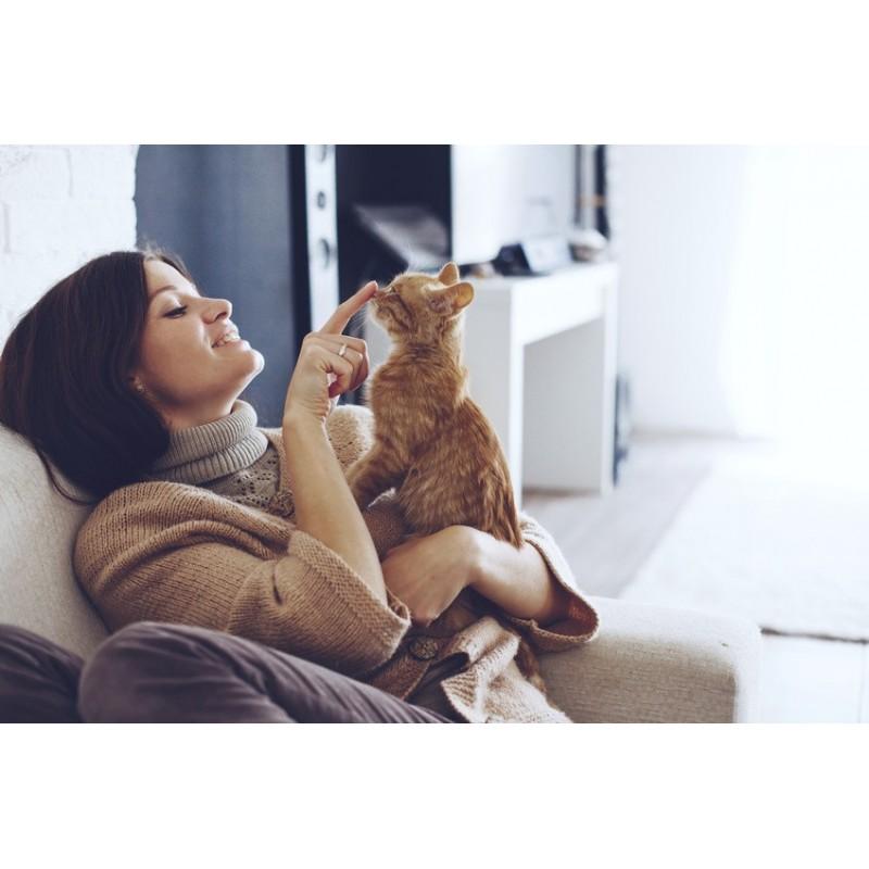 8 comportements qui montrent que votre chat est heureux près de vous !