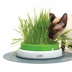 Jardin herbe à chat Senses 2.0 - CAT IT