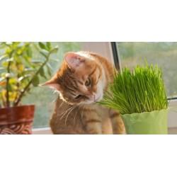 Herbe à chat à faire pousser fabriquée en France - WASABYCAT