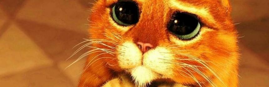 Les 10 Techniques Infaillibles Pour Convaincre Votre Moitie D Adopter Un Chat Cat Apart